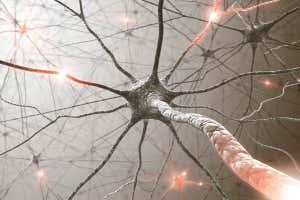 La impresión de un artista de las neuronas